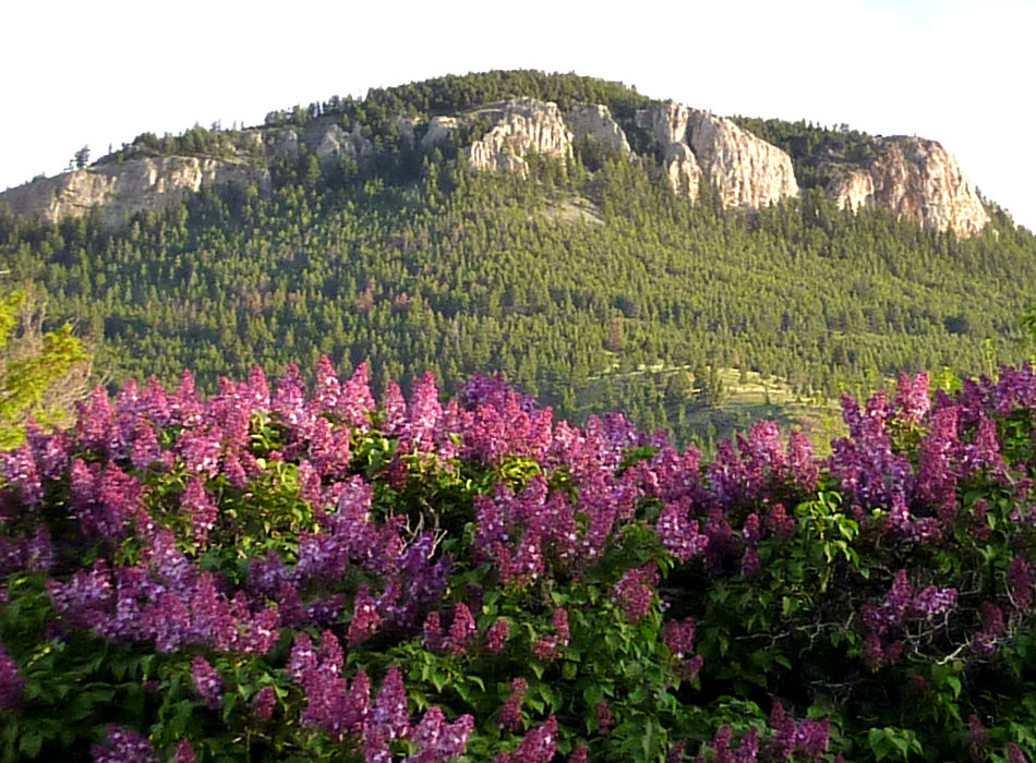 http://helenamontana.com/wp-content/uploads/2016/10/cropped-Mount-Helena-with-Lilacs.jpg